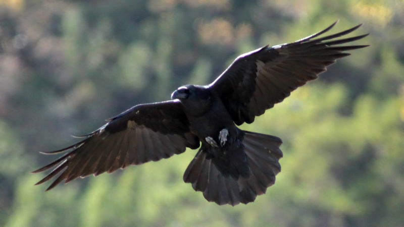 the raven creating the melancholic tone Poe's classic poem about lost love uses several strategies to create the proper  mood for such a tale the presence of the raven itself sets the tone for this spooky .