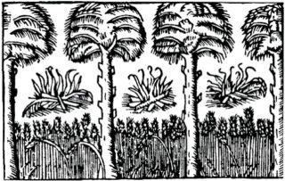 Svedjebränning, from Olaus Magnus' Historia de gentibus septentrionalibus of 1555.