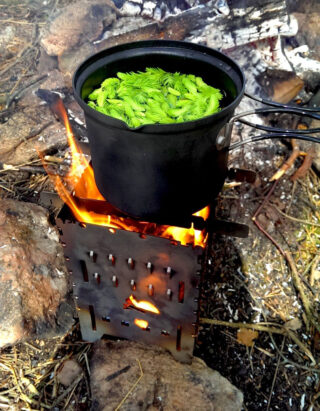 Boiling some pine needle tea with the Bushbox XL